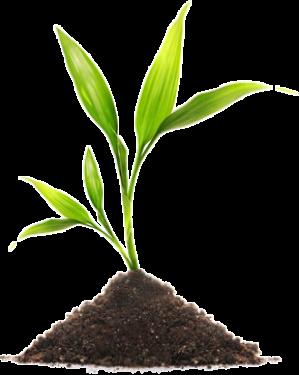 plante Vitrine @rt'